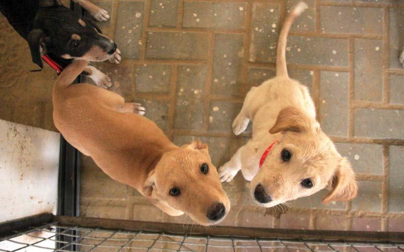 stray injured animals find a home in karachi