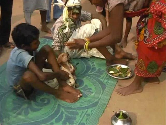 seven year old indian boy forced to marry dog to ward off evil spirits