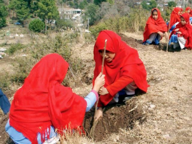 Schoolgirls plant saplings at Sangara in Haripur. PHOTO: INP