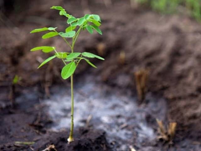 The countrywide plantation drive will kick off from February PHOTO: AFP