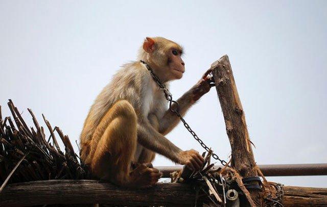 monkey dancers snake charmers banned