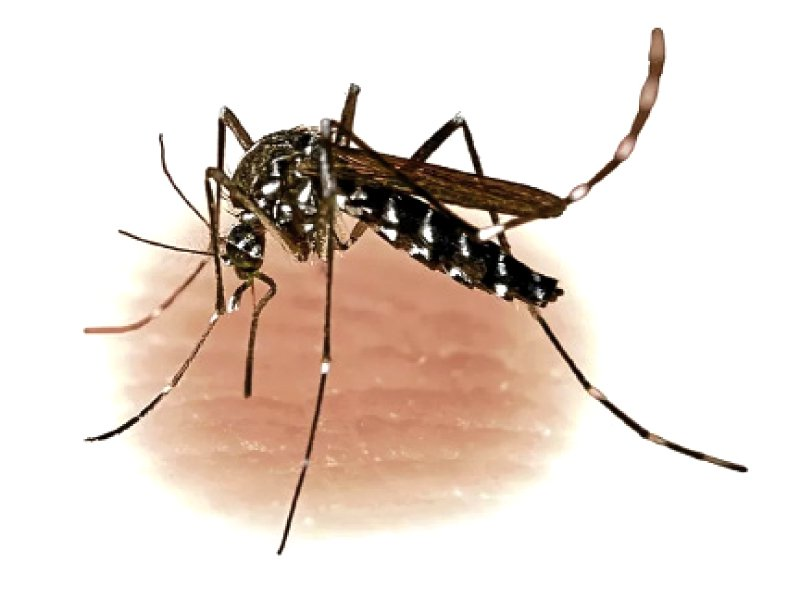 symposium dengue can be controlled through prevention cure