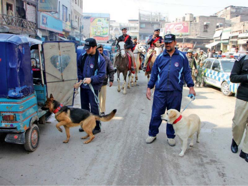 fighting terror sniffer dogs provided to mounted police
