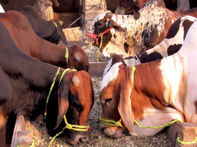 pvma deals worth rs2b signed during dairy livestock expo