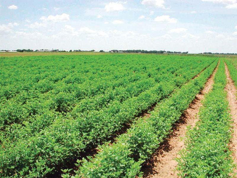 agriculture research council ministry takes notice of alleged nepotism