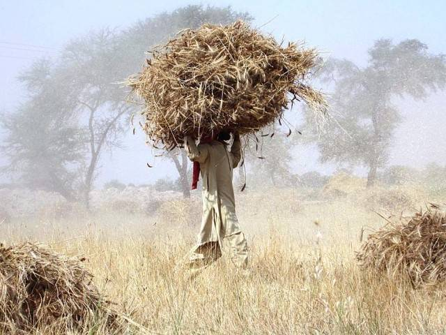 govt considering proposal to allow private companies to procure wheat this year photo app