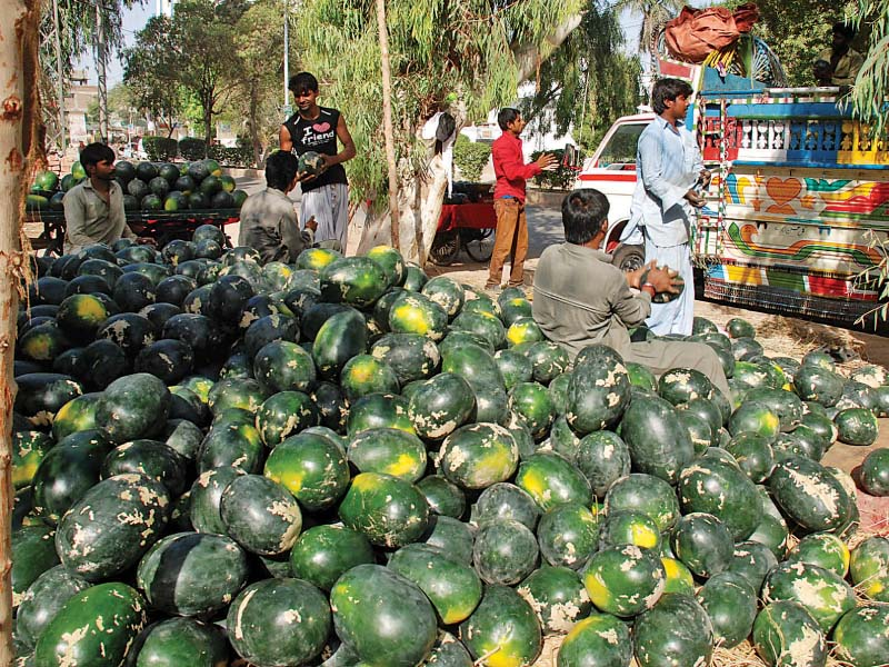 according to a paper by ashraf mallah the use of pesticides has harmful effects on not just the farmers but also the food consumers he counted a range of vegetables and fruits that contain varying amounts of pesticide residues by the time they reach the market photo shahid ali express