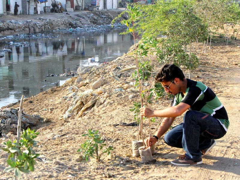 fixit campaigners planted trees on the right bank of manzoor colony nullah on thursday evening photo aysha saleem express