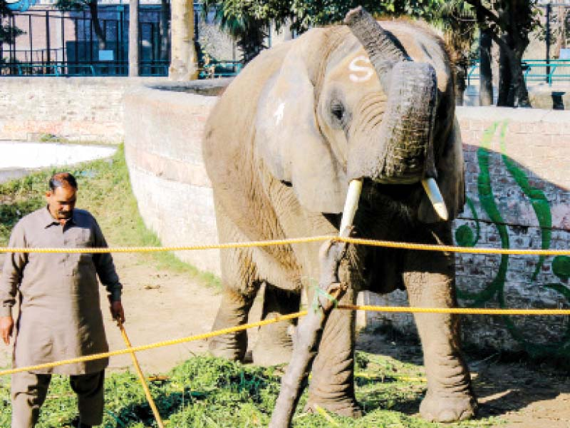 a day with suzi the elephant