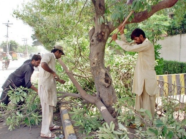 earth day punjab s tree replacement policy seen as inadequate