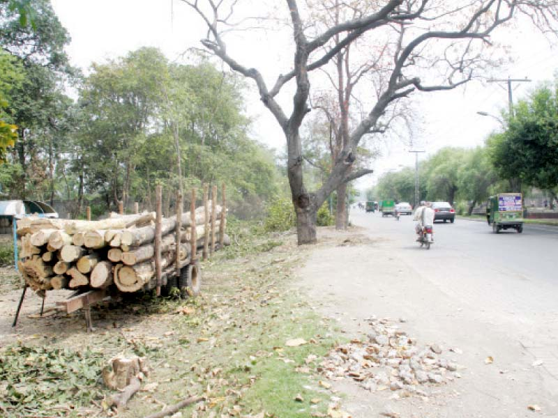 city govt workers cutting trees along the canal near royal palm club photo express