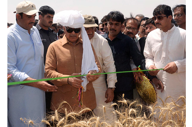 cm punjab inaugurates 2016 wheat harvesting campaign in khairpur tamewali photo express