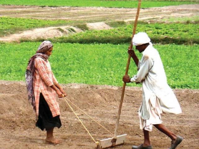 fertiliser subsidy sc seeks govt reply on kissan package legality