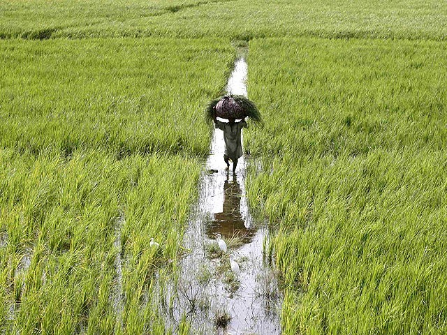 impact of food security is growing concern among farmers photo reuters file