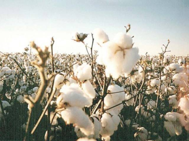 recommendation comes after farmers blamed such seeds for 40 output fall photo file