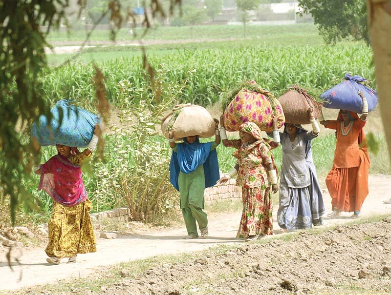 Village women haul fodder on head at a field near Rahim Yar Khan. According to latest figures, one-third of the population lives below the poverty line. PHOTO: SARDAR AHMED/EXPRESS