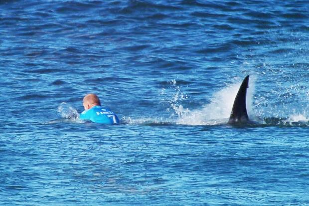 Man under attack from a shark. PHOTO: REUTERS
