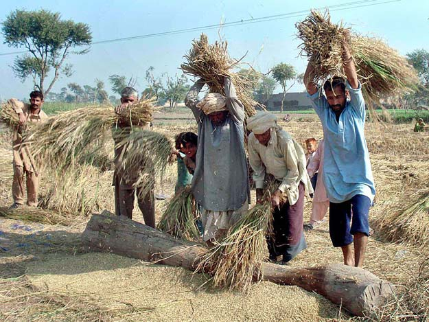 benefitting farmers durable solutions sought to increase productivity