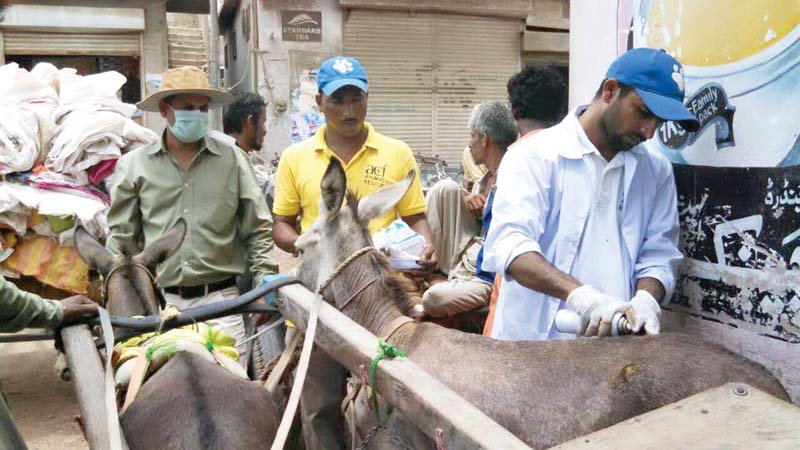 on a mission someone to care for the beasts of burden