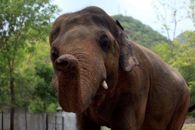 kaavan quickly adapts to new home in cambodia