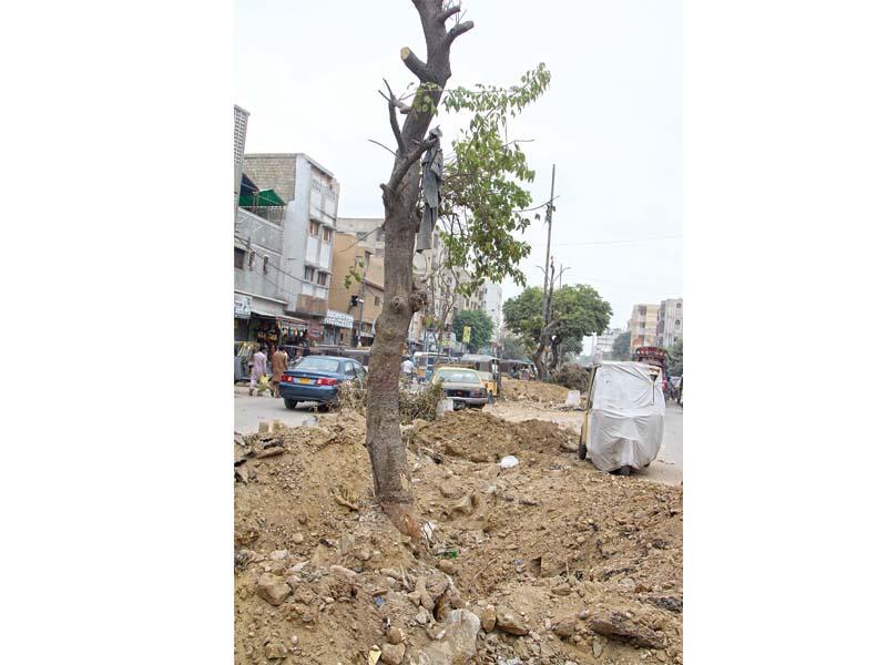 nature preservation green line brt tree transplantation begins