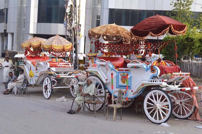 royal transport the reemergence of buggy culture