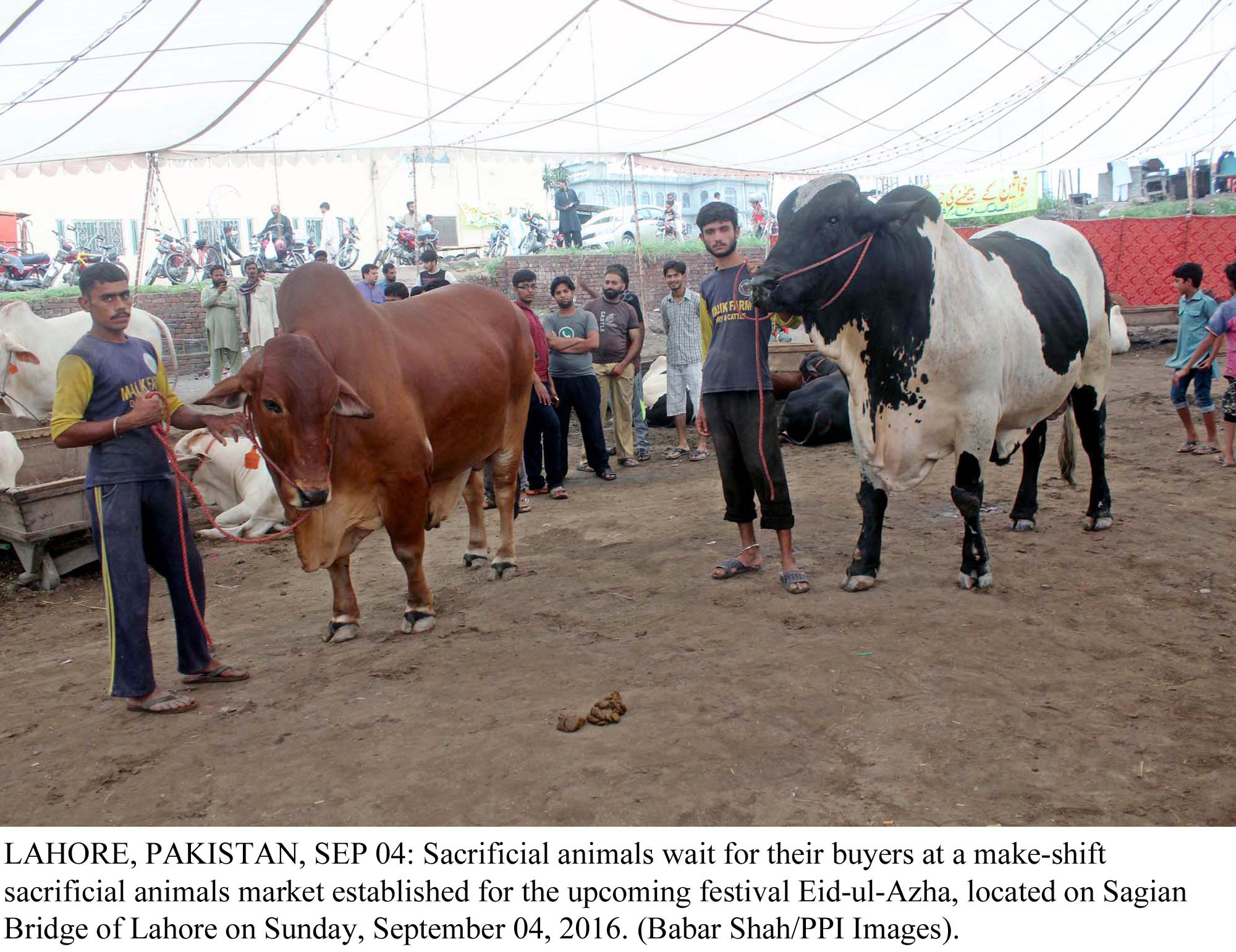 university of animal sciences to be set up in bahawalpur