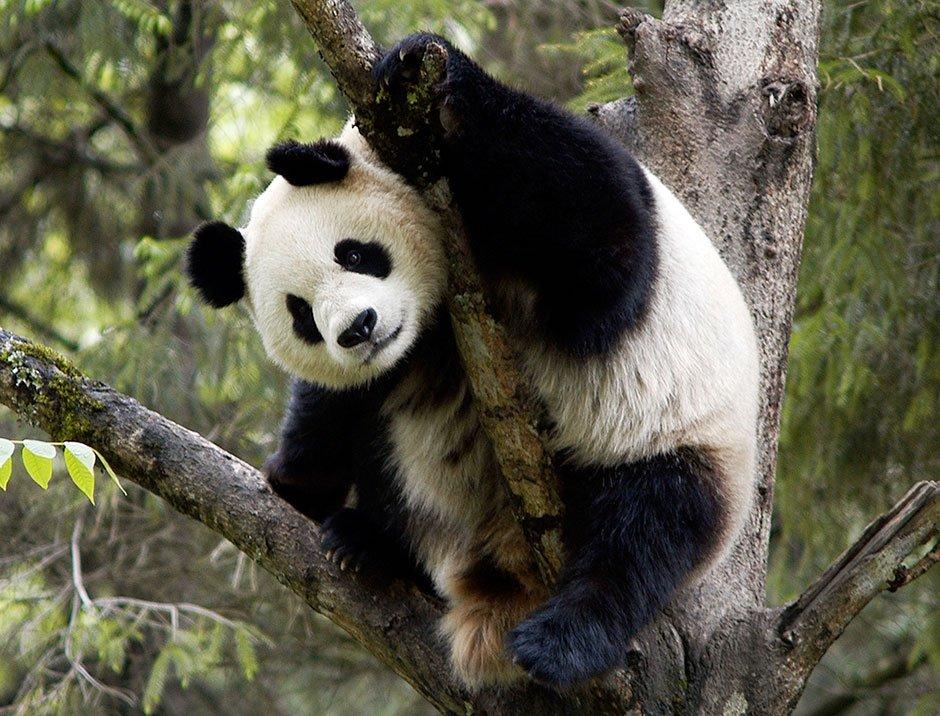 PHOTO: WWF