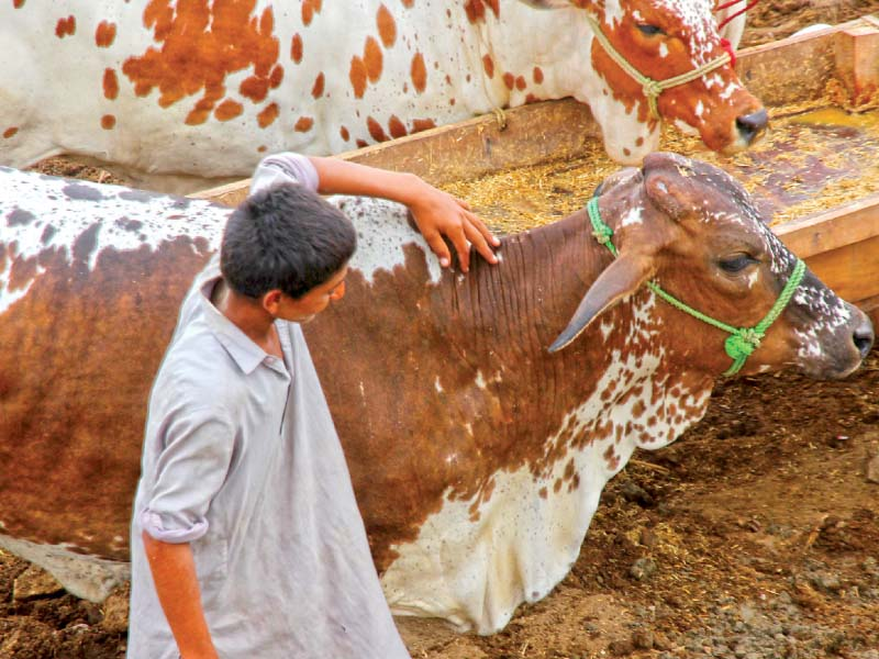 precautionary measures keep cattle markets clean