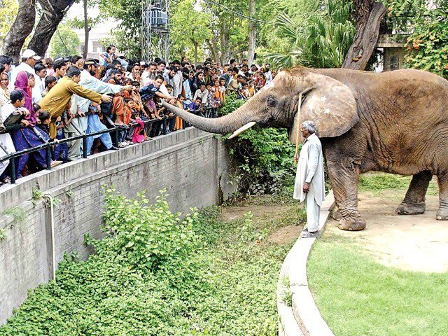 wildlife dept head urges people to cooperate with zoo staff during eid