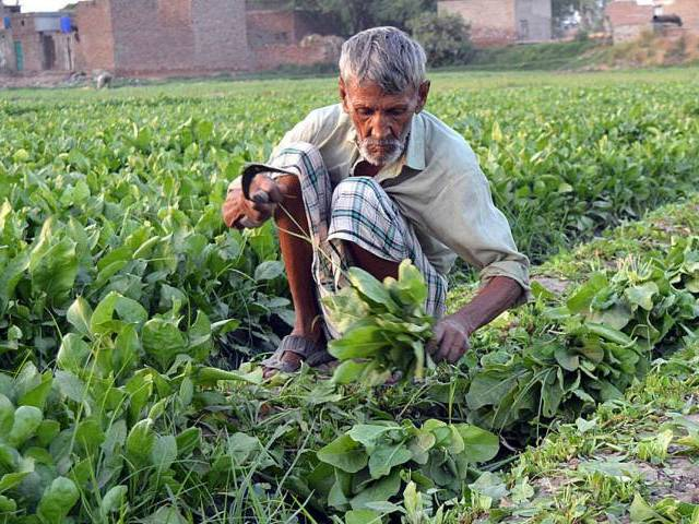 agriculture development punjab govt world bank ink deal