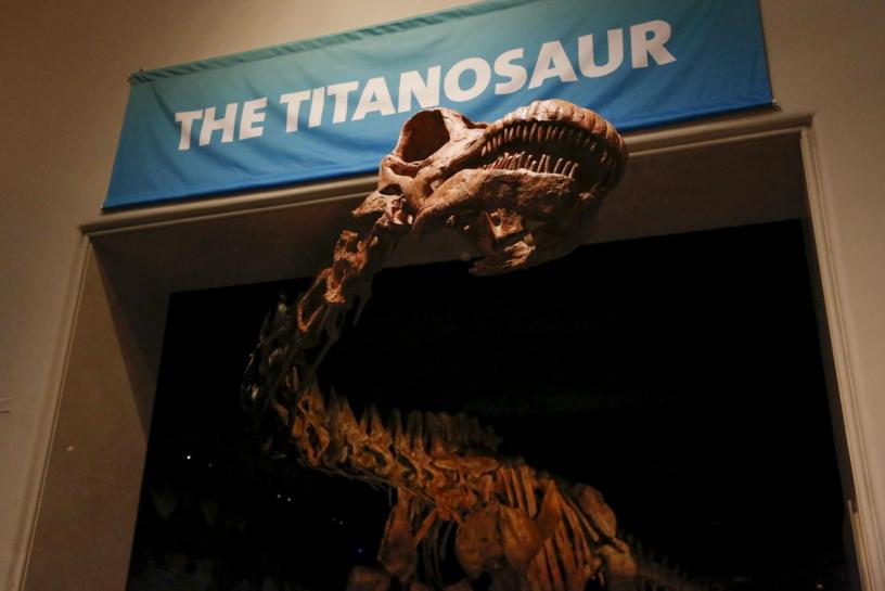 The skeleton cast of a titanosaur is seen during a media preview at the American Museum of Natural History in New York. PHOTO: REUTERS