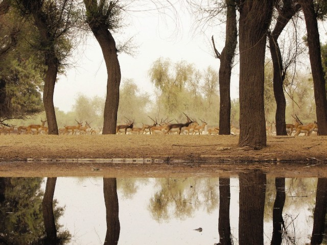 natural habitat kanwal lake being restored