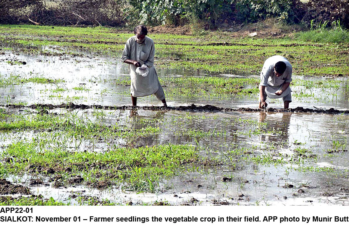 food insecurity farmers poor suffer as stocks of food remain unutilised