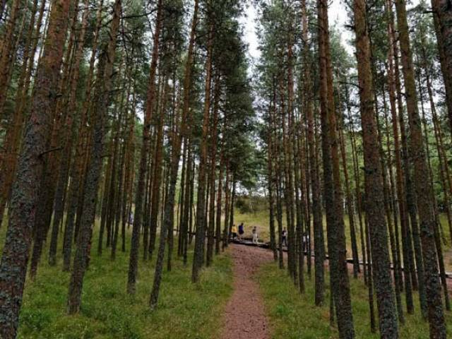 government looks for private investments in forests
