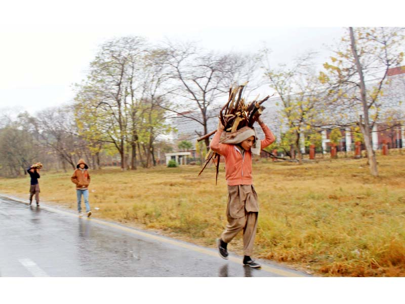 gas shortage illegal logging on the rise in capital