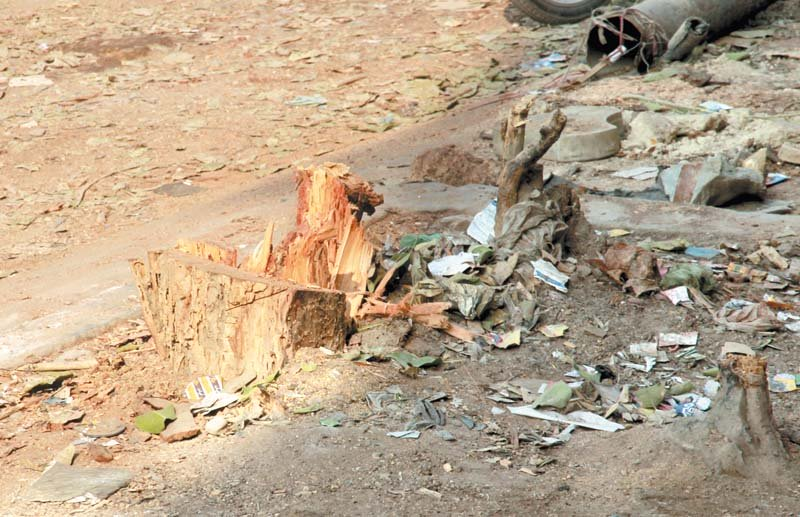 90 year old tree collapses with a whimper in karachi