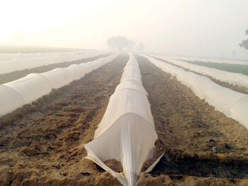 plastic sheets used to create tunnels in a field in gujranwala photo online