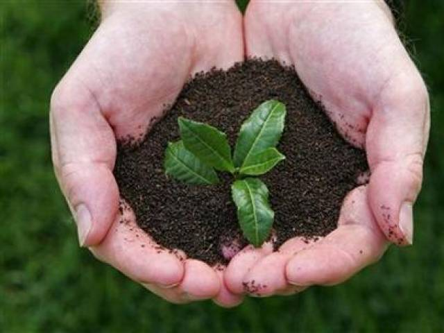 green pakistan 7 000 saplings planted in koral forest