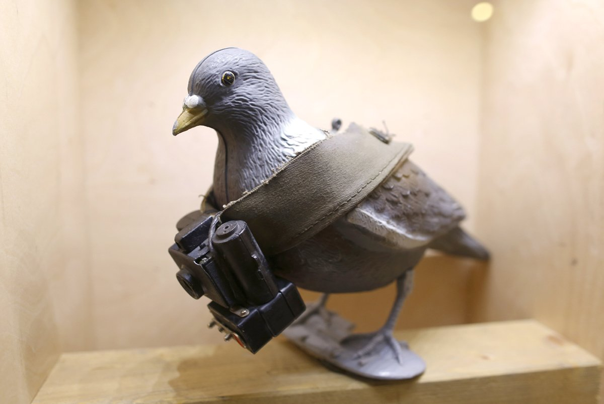 a mock up of a pigeon with a small camera is seen on display at the 039 top secret 039 spy museum in oberhausen july 10 2013 the museum presents various objects devices and gadgets used for spying or related to espionage reuters ina fassbender germany   tags society entertainment