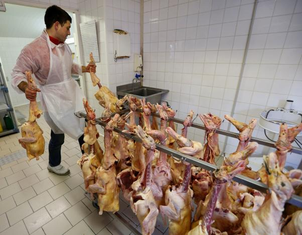an employee works on a rack of slaughtered ducks at a poultry farm in eugenie les bains france january 24 2017 as france scales back preventive slaughtering of ducks to counter bird flu after the culling of 800 000 birds this month helped slow the spread of the disease photo reuters