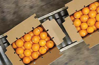 russian authorities agreed to partial lifting of the ban as a first step and allow import of citrus fruits into russia photo file