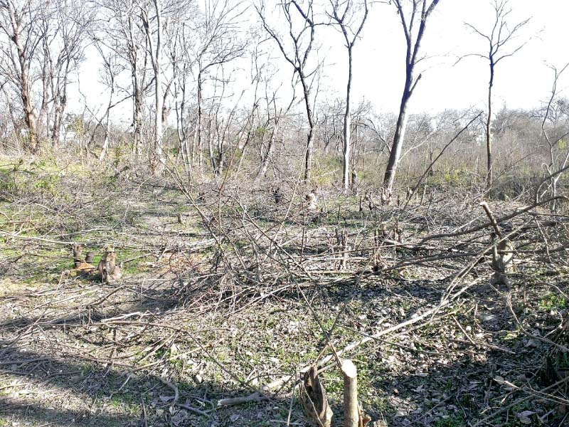 timber mafia dozens of trees cut in sector g 8 2