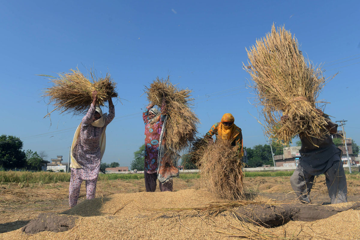 pm approves building colony at national agriculture research council s land photo afp
