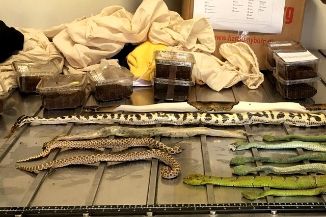 shoe boxes filled with snakes spiders and scorpions caught in australia
