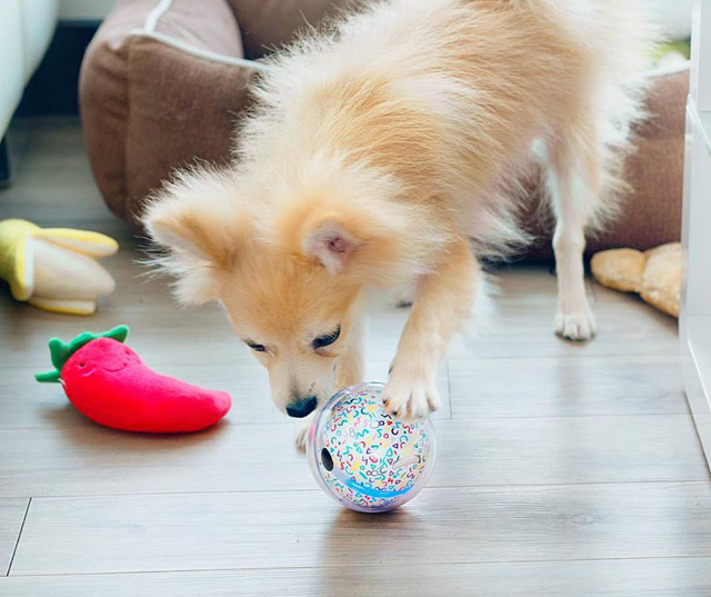 this smart ball lets you play with your pet even when you re not home