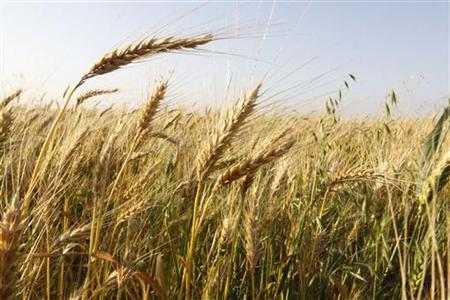 sustainable sustenance pakistan has potential for food self sufficiency
