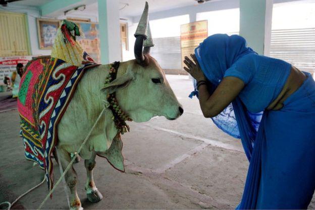 beef was never on aligarh university hostel menu claims urdu writer
