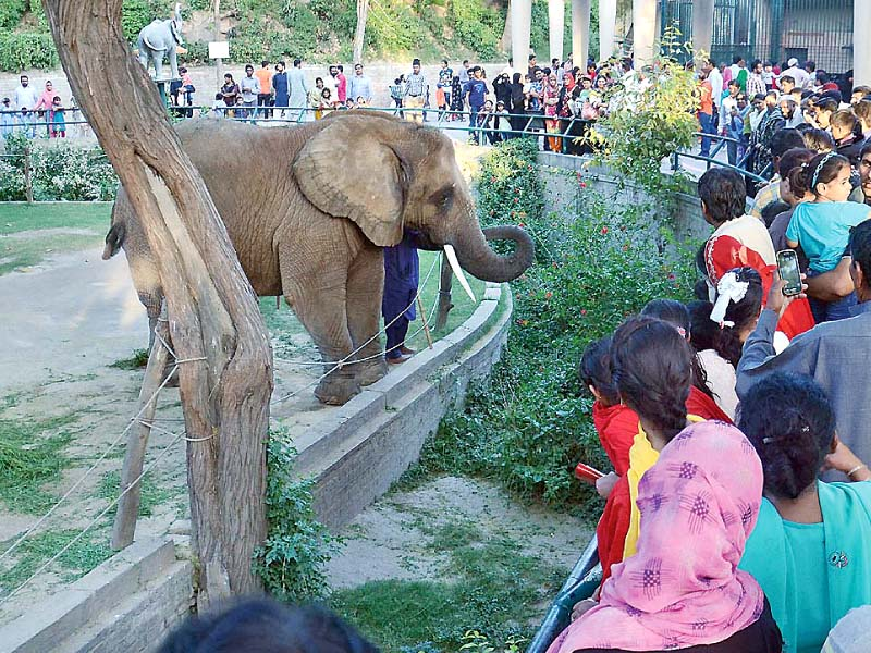 wildlife secretary suspends zoo director for 90 days photo online