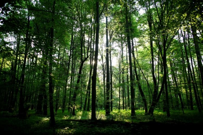spfc to give out 99 077 acres of land for afforestation
